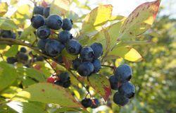 Medium fill 81f7e2204d bulberi